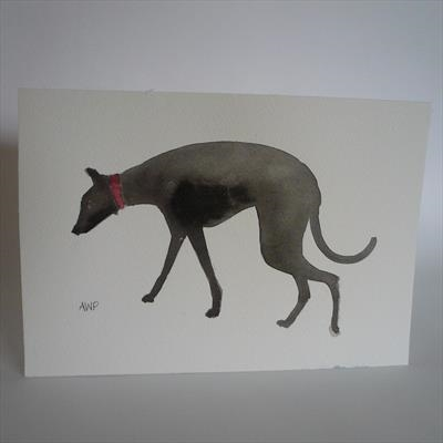 Black Greyhound With Red Collar