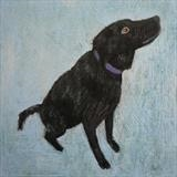 Black Labrador On Blue by Anna Wilson-Patterson, Painting, Oil on Wood