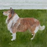 Border Collie by Anna Wilson-Patterson, Painting, Oil on Wood