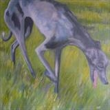 Greyhound Runner by Anna Wilson-Patterson, Painting, Oil on canvas