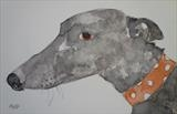 Greyhound with spotty collar by Anna Wilson-Patterson, Painting, Watercolour on Paper