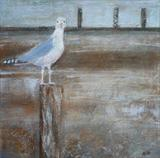 Welcome Gull by Anna Wilson-Patterson, Painting, Oil on canvas